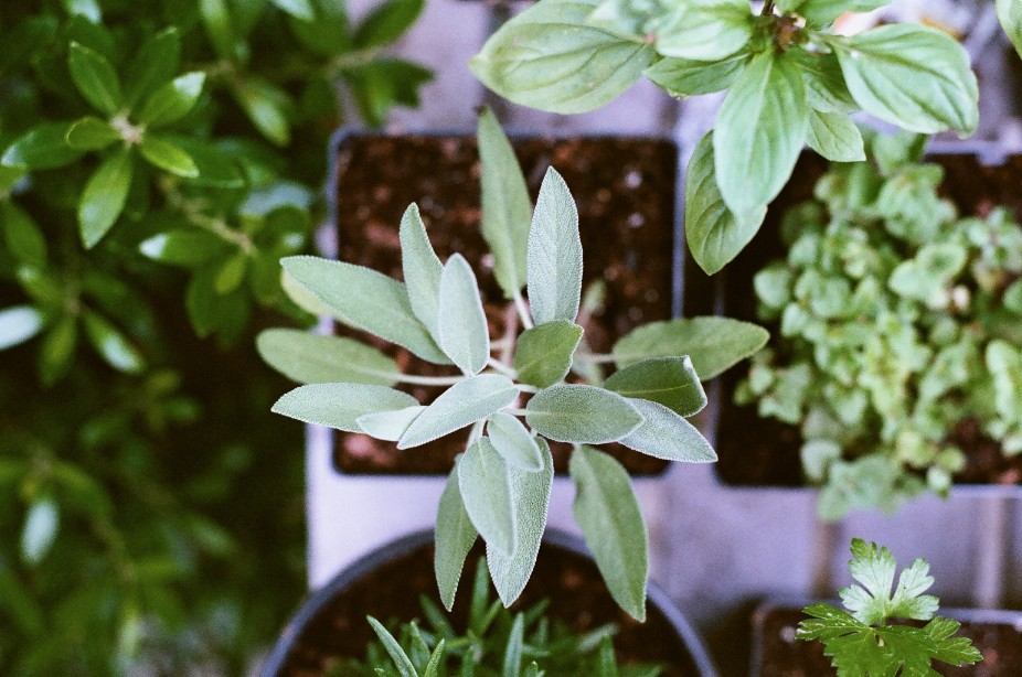 What to know about starting an herb garden